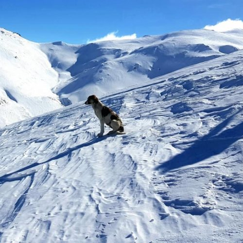 Cat skiing Bakhmaro